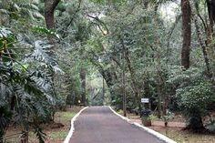 Portal do Município de Cascavel | Zoo de Cascavel participa do Dia Nacional de Urubuzar. Foto: Vanderlei Faria.