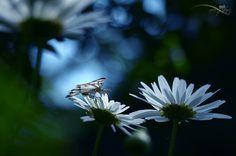 La felicità è come una farfalla: se l'insegui non riesci mai a prenderla, ma se ti metti tranquillo può anche posarsi su di te.