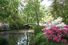 Villeneuve-sur-Allier, arboretum de Balaine