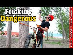 Tree work for the Beginner. How to climb, Set rigging, Spurs, Ropes & harness. Climbing Harness, Climbing Rope, Survival Knots, Tree Felling, Rappelling, Horticulture, Rigs, Good To Know, Garden Landscaping