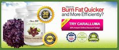 Choice 1000 Caralluma is the new diet crazy sweeping the globe. This scientifically studied extract has amazing weight loss properties that changes dieting.
