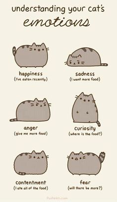 Emotions of a cat