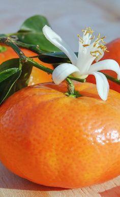 Kinds Of Fruits, Orange, Recipes, Food, Storage, Essen, Meals, Ripped Recipes, Eten