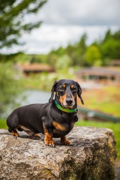 If you need Bruno your miniature dachsund to attend your wedding, then he's most welcome! 16 of our lodges are dog friendly so he can stay the week, or slip off to bed if the party runs too late. Wedding Venues Yorkshire, Unique Wedding Venues, Brompton, North Yorkshire, Dog Friends, Lodges, Big Day, Miniature, Pets