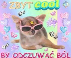 Cute Memes, Funny Cute, Funny Memes, Cute Pictures, Cool Photos, Polish Memes, Heart Meme, Cute Messages, Wholesome Memes