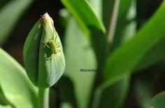 ...na sluníčku Flowers, Plants, Florals, Planters, Flower, Blossoms, Plant, Planting
