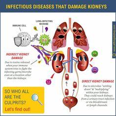 Kidney Failure, Kidney Disease, Human Kidney, Red Blood Cells, Closer, Medicine, Health, Health Care, Medical