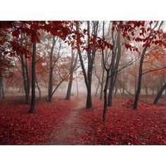 fall photos / 500px / 500px ❤ liked on Polyvore featuring backgrounds, autumn, misc pics and photos