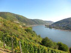der Rhein bei Lorch