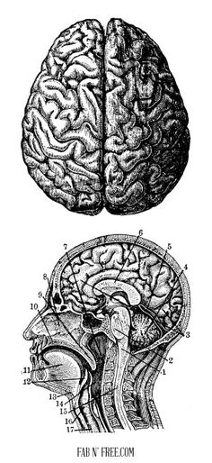 interesting... Free Vintage Brain Graphics // fabnfree.com