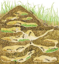 Prevent the formation of ant colonies in your yard - Call Expert Pest Control at 800-235-3093!