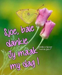 ~ Bible Quotes, Me Quotes, Baie Dankie, Birthday Prayer, Afrikaanse Quotes, Goeie Nag, Goeie More, Good Morning Wishes, Strong Quotes