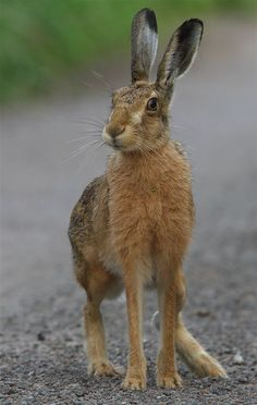 Here hare here....Time to enjoy the countryside and learn more about it.  fatnfurry