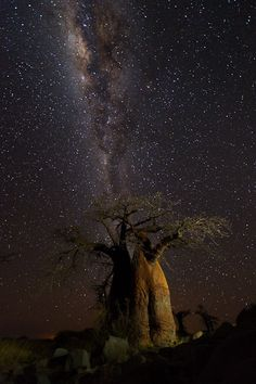 Isak Pretorius Photography - BOTSWANA    Love this shot, especially the highlights of the tree focused on one side... Gives it a subtle foreground focus without distracting from the astronomical background!