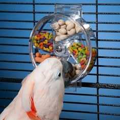 Keeping your parrot's mind active with foraging toys like this one http://amzn.to/1915UtT (pic from Drs. Foster and Smith)