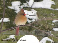 Birds in the Winter Wildlife Garden: How to care for birds in the winter landscape.