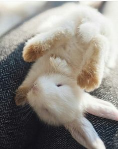 pinterest: simonewanscher Adorable Bunnies, White Bunnies, White Rabbits, Cute Bunny, Funny Bunnies, Pet Bunny Rabbits, Baby Chickens, Fluffy Rabbit, Rabbit Baby