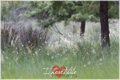 I {heart} summer breezes in Alcaniz