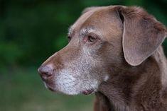 Descubre si tu perro 'viejito' está saludable como un roble |