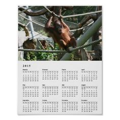 Baby Orangutan Hang in there 2015 Calendar Posters #sold on #zazzle