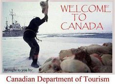 Petitions to Stop the Canadian Seal Hunt!!!:   http://www.causes.com/causes/13132-helping-to-stop-the-seal-hunt/welcome https://secure.peta.org/site/Advocacy?cmd=display=UserAction=4119   http://www.change.org/petitions/stop-seal-slaughter-in-our-world   http://www.gopetition.com/petitions/help-stop-seal-hunt.html   http://www.canadiansealhunt.com/petitions.html @sea Shepherd Conservation Society #defendconserveprotect