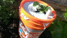 HOW TO MAKE A SELF WATERING PLANTER WITH A 5 GALLON BUCKET