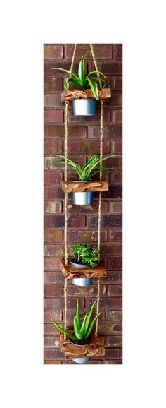 Hanging planter indoor planter succulent by JuniperWoodshop