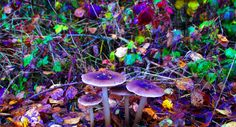 Mushrooms Are Now Considered the Safest Recreational Drug