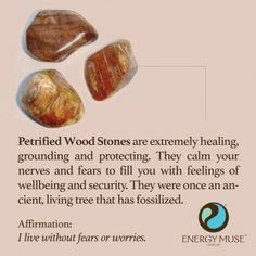 Petrified Wood Stones
