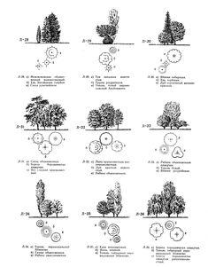 Ландшафтные композиции