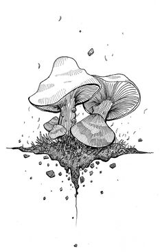 Pen & ink mushrooms by Omar Shammah, via Behance Mushroom Drawing, Mushroom Art, Doodle Drawings, Drawing Sketches, Zeina, Jolie Photo, Psychedelic Art, Gravure, Art Plastique