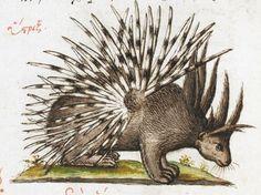 British Library, Burney MS 97, Manuel Philes, De animalium proprietate (Greed) (1566)