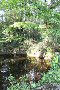 155/365 Pond