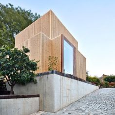 Cross-shaped+artist's+studio+by+Arquitecturia+frames+the+base+of+an+old+ash+tree