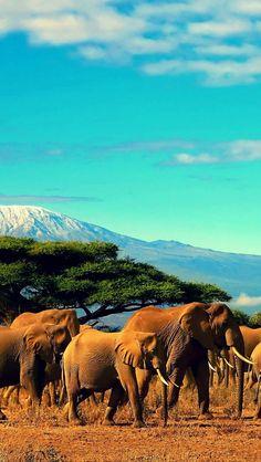 Des vacances relax en Tanzanie ! | plage, vacances, séjour, île, paradisiaque. Plus d'idée sur bocadolobo.com/...