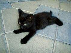 The_Black_cat_by_blackmantra