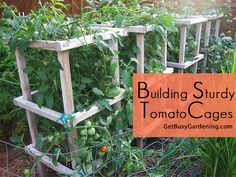Those flimsy wire tomato cages are no match for the weight of a full grown tomato plant. Here's a plan for building your own Sturdy Tomato Cages... #getbusygardening #veggiegarden