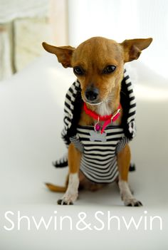 Today's free pattern is something a little different, it's for our furry friends. You see my sister and brother in law have a sweet little Chihuahua named Gia. The poor little thing is cold all the time, and in winter it's worse. So I made her a sweater. (one slightly warmer than the one she …