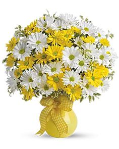 Lovely white and yellow daisies.