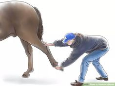 Image titled Stretch a Horse Step 9