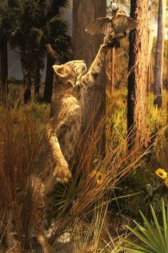 Osceola County Welcome Center and History Museum|i.seeKissimmee Blog