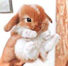 Baby Farm Animals, Baby Animals Super Cute, Cute Wild Animals, Baby Animals Pictures, Cute Little Animals, Cute Animal Pictures, Cute Funny Animals, Cute Baby Bunnies, Cute Baby Dogs
