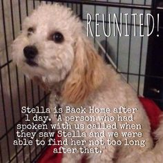 "Stella is Back Home! We are VERY pleased this pet is Back Home. This pet was BACK HOME after 1 day.  Lost on:	Jul 03, 2015 Date Back Home: Jul.05, 2015 Location: La Habra, CA County: Orange ""A person who had spoken with us called when they saw Stella and we were able to find her not too long after that."""