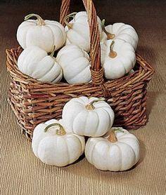 Pumpkin Baby Boo | Garden Seeds and Plants