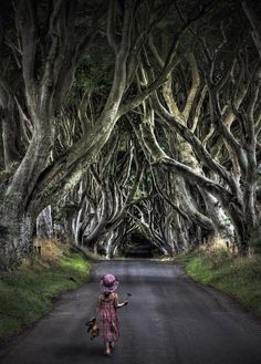 The Eerie Forest  location: The Dark Hedges on Bregagh Road, Armoy, County Antrim in Northern Ireland.  photo © Dave Lally