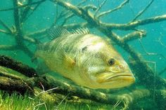 Freshwater Lures: Largemouth Bass Fishing, Identifying Hotspots