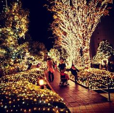 Weihnachtsbeleuchtung Für Draußen.Die 174 Besten Bilder Von Weihnachtsbeleuchtung Aussen In 2018