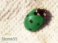 Green Ladybug