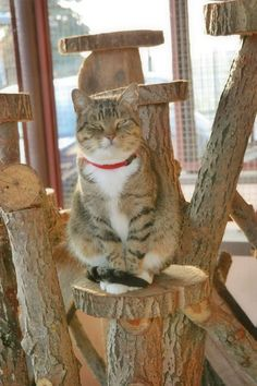 beautiful cat and selfmade cattree