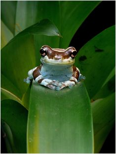 Smiling Frog by Artemis. He looks so absurdly smug!